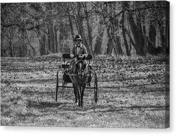 Morning Buggy Ride In Bluebell In Black And White Canvas Print