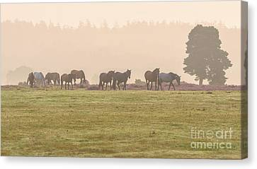 Morning Commute  New Forest Canvas Print by Richard Thomas