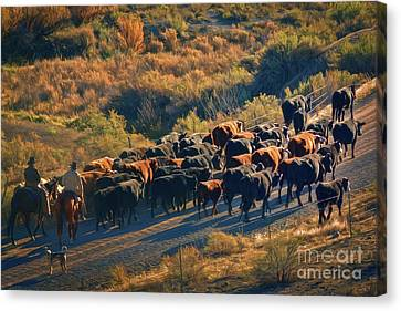 Brown Ranch Trail Canvas Print - Morning Cowboys Cattle And A Dog by Janice Rae Pariza