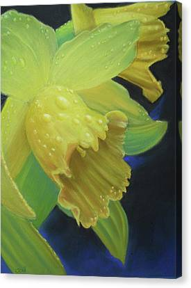 Morning Daffodil Canvas Print by Joan Swanson