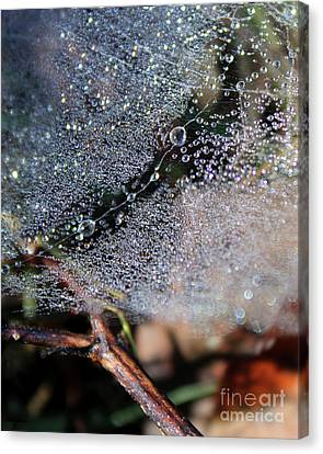 Silk Water Canvas Print - Morning Dew Drops On Spiderweb  by Adam Long