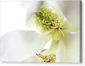 Canvas Print featuring the photograph Morning Dew Magnolia by JC Findley