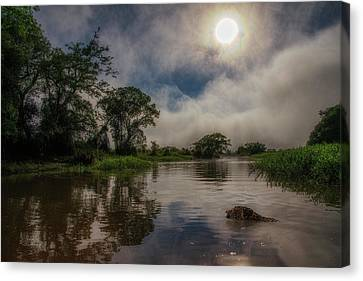 Canvas Print featuring the photograph Morning Dip by Wade Aiken