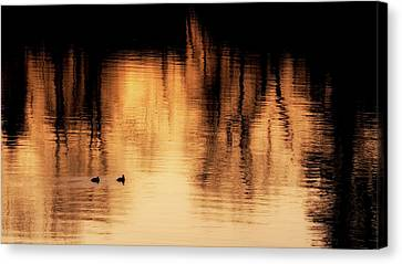 Litchfield County Canvas Print - Morning Ducks 2017 by Bill Wakeley