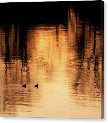 Morning Ducks 2017 Square Canvas Print by Bill Wakeley