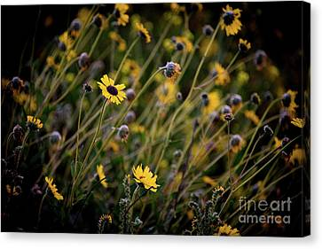 Canvas Print featuring the photograph Morning Flowers by Kelly Wade