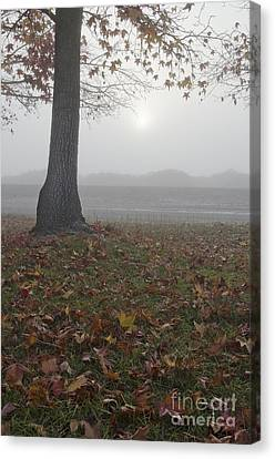 Morning Fog Canvas Print by Jim and Emily Bush