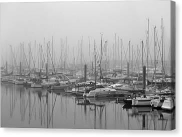 Morning Fog Canvas Print by Terence Davis