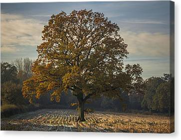 Morning Frost Canvas Print by Chris Fletcher