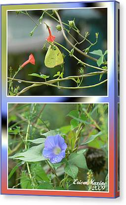 Morning Glories And Butterfly Canvas Print by EricaMaxine  Price