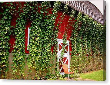 Morning Glories On The Barn Canvas Print