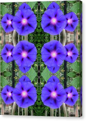 Morning Glories Welcome Canvas Print