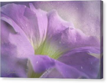 Morning Glory Canvas Print by Ann Lauwers