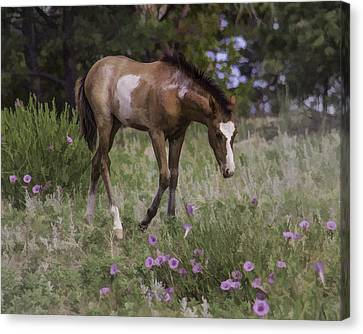 Morning Glory Canvas Print