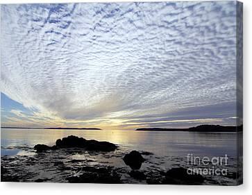 Morning Glory Canvas Print by Scott Nelson