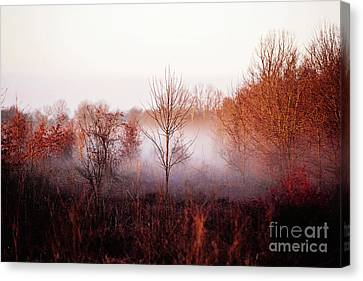 Morning Glory Canvas Print by Scott Pellegrin