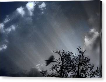 Canvas Print featuring the photograph Morning  by Gray  Artus
