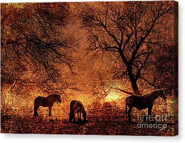 Morning Has Broken Canvas Print by Callan Percy
