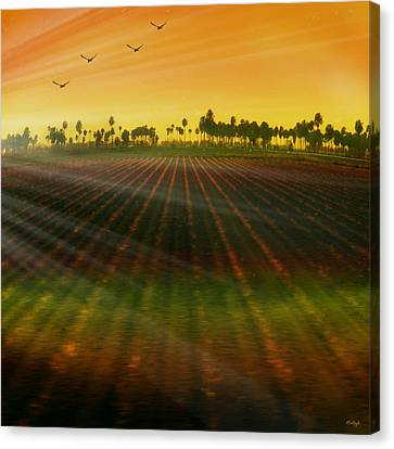Sun Rays Canvas Print - Morning Has Broken by Holly Kempe