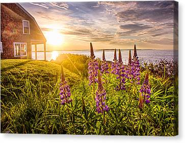 Morning In Maine Canvas Print by Benjamin Williamson