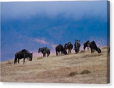 Morning In Ngorongoro Crater Canvas Print