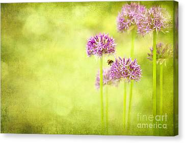 Morning In The Garden Canvas Print