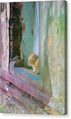 Morning In The Temple A Cats Perspective Canvas Print by Mike Reid