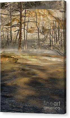Morning Light On  Mammoth Terrace Canvas Print by Sandra Bronstein