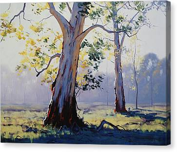 Eucalyptus Canvas Print - Morning Light Eucalypt by Graham Gercken