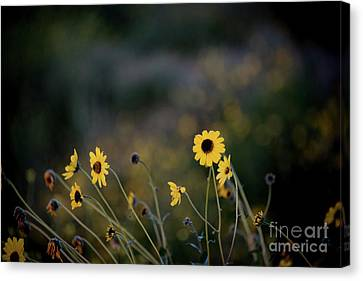 Canvas Print featuring the photograph Morning Light by Kelly Wade