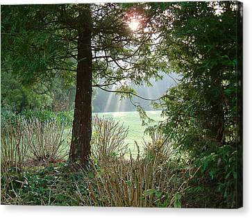 morning light rays in Golden Gate Park Canvas Print by Michael Roll
