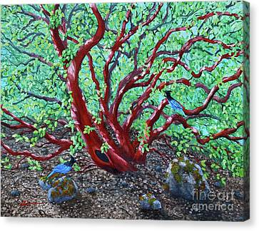 Morning Manzanita Canvas Print by Laura Iverson