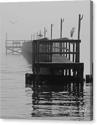 Canvas Print featuring the photograph Morning Meeting by Joe Jake Pratt