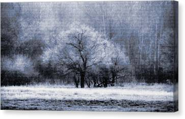 Morning Mood Canvas Print by Mimulux patricia no No