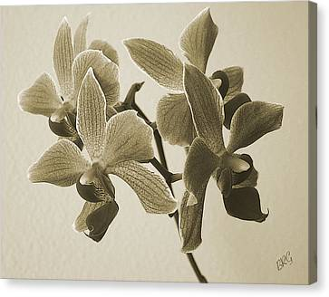 Morning Orchid Canvas Print by Ben and Raisa Gertsberg