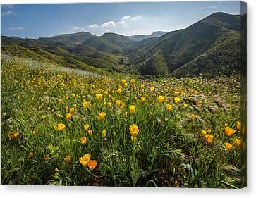 Morning Poppy Hillside Canvas Print