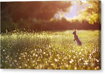 Morning Rabbit Canvas Print by Rima Biswas