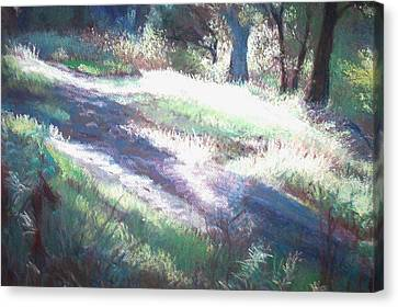 Morning Rays Canvas Print by Anita Stoll