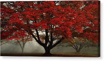 Morning Rays In The Forest Canvas Print by Ken Smith