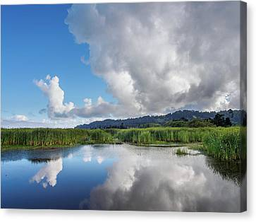 Morning Reflections On A Marsh Pond Canvas Print by Greg Nyquist
