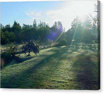 Morning Shadows Canvas Print