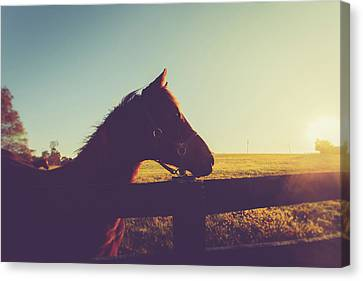 Canvas Print featuring the photograph Morning  by Shane Holsclaw