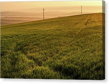 Canvas Print featuring the photograph Morning Sun. Moravian Tuscany by Jenny Rainbow