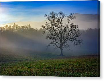 Morning Sunbeams In Cades Cove Canvas Print