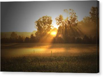 Morning Sunrise On The Cornfield Canvas Print by Cathy  Beharriell