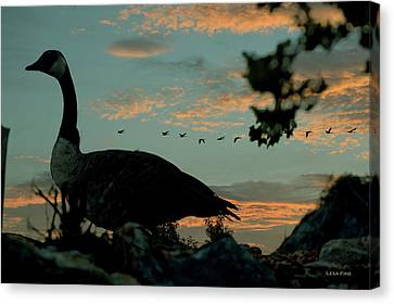 Morning Traffic Canadian Geese Canvas Print by Lesa Fine