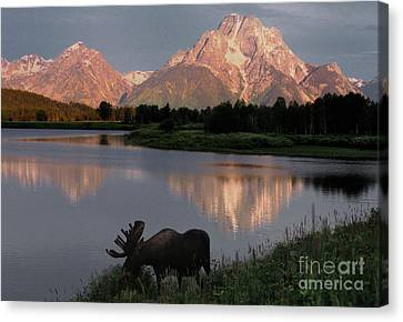 Teton Canvas Print - Morning Tranquility by Sandra Bronstein