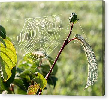 Morning Web #1 Canvas Print