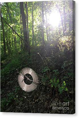 Canvas Print - Web Weaving In The Early Morning Forest by Adam Long