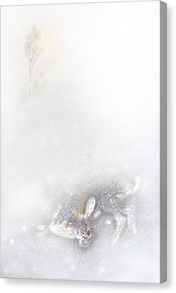 Morning's Hush Canvas Print